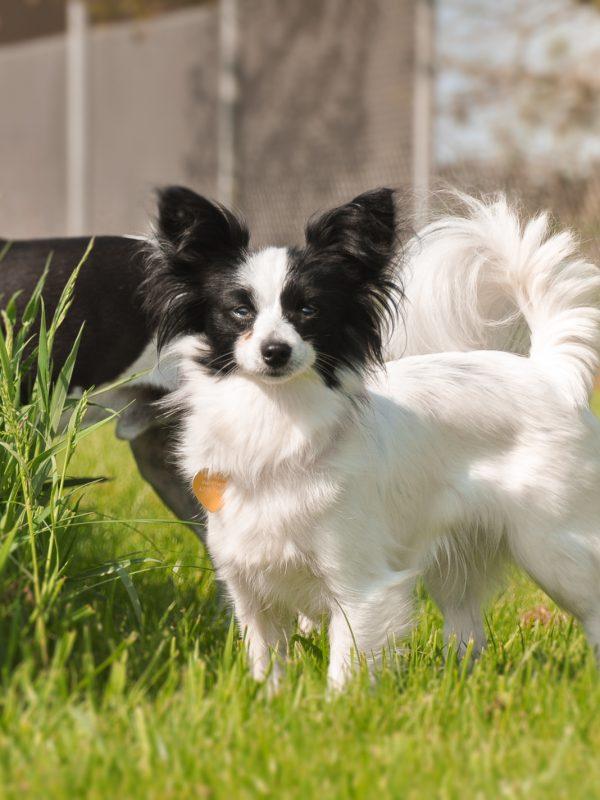 Gærup Hunde og kattepension - Lille hund i græsset