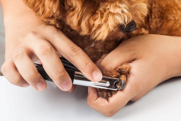 Gærup Hunde og kattepension - hund der får klippet negle